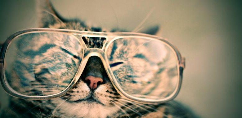 Eine Katze mit einer riesigen Brille